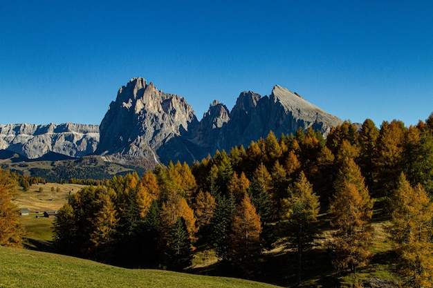 Beautiful shot of green trees and mountain in the distance in dolomite italy