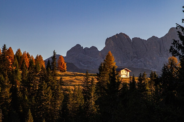 Beautiful shot of green trees with a house and mountain in the distance in dolomite italy