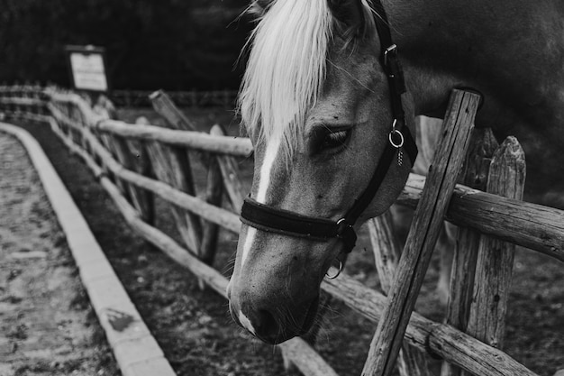 Beautiful shot of a horse in black and white hanging its head on wooden fence
