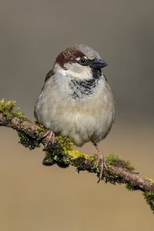 Beautiful shot of a house sparrow bird on the branch of a tree in the forest
