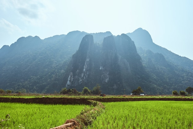 Beautiful shot of karst mountains with rice paddies in the foreground in vang vieng, laos