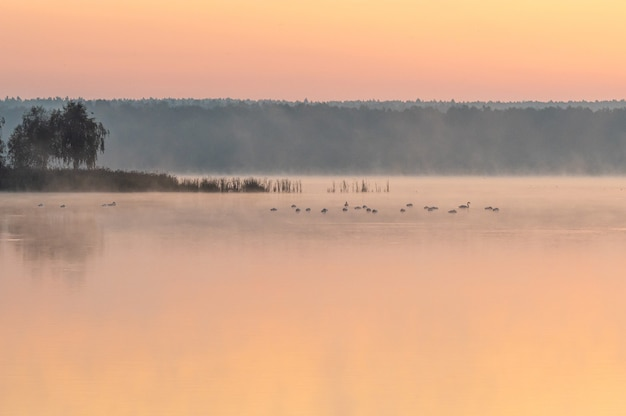 Bellissimo scatto di un lago durante il tramonto con uccelli