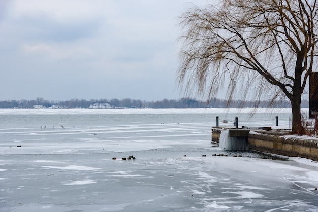 Beautiful shot of a lake and pier at winter, with the water frozen and dead trees during daylight