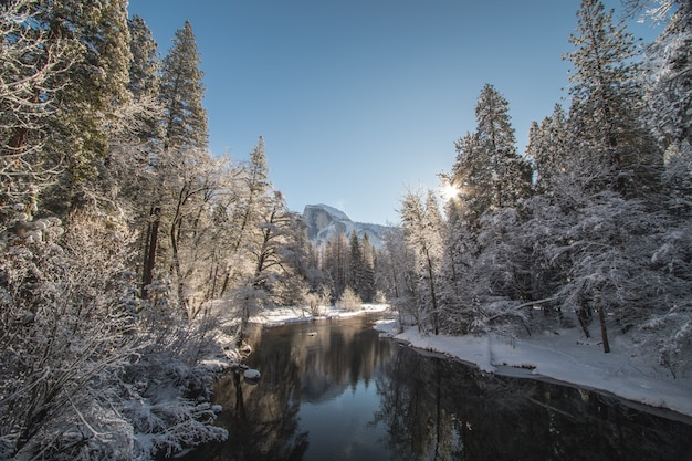 Beautiful shot of a lake surrounded by spruces filled with snow under a clear sunny sky