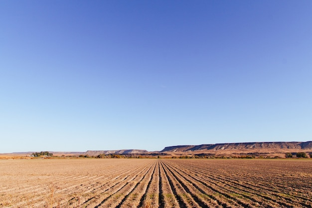 Beautiful shot of a large agricultural field with amazing clear blue sky