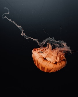 Beautiful shot of a large orange jellyfish floating in the depths of the dark ocean