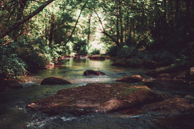 Beautiful shot of a little river in a forest
