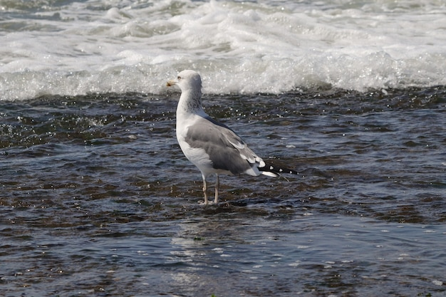 Beautiful shot of a lonely seagull in the seawater