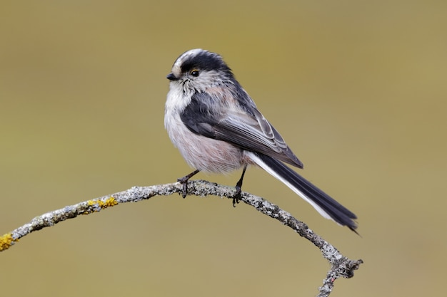 Beautiful shot of a long-tailed tit bird perched on a branch in the forest