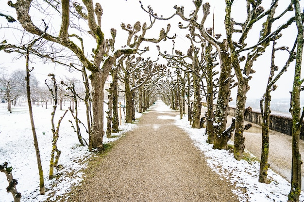 Beautiful shot of a narrow pathway surrounded by trees under the snow