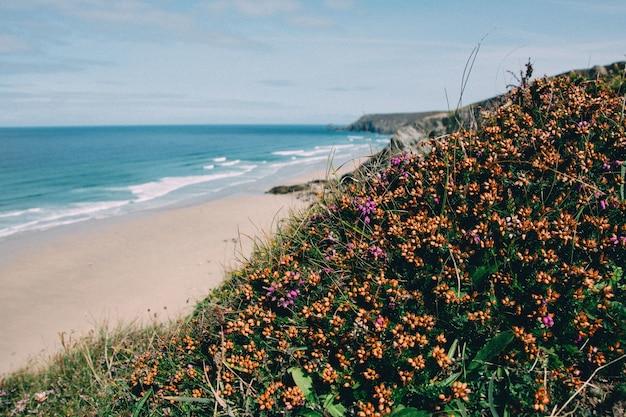 Красивый снимок бухты с растениями и цветами