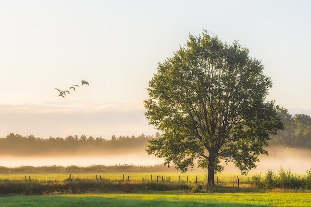 芝生のフィールドに大きな緑の葉のある木の美しいショット