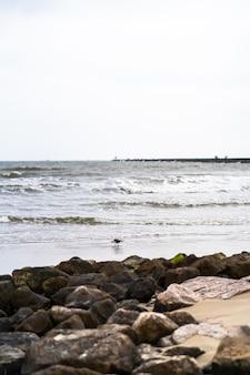 Красивый снимок птицы, идущей по песку каменистого пляжа