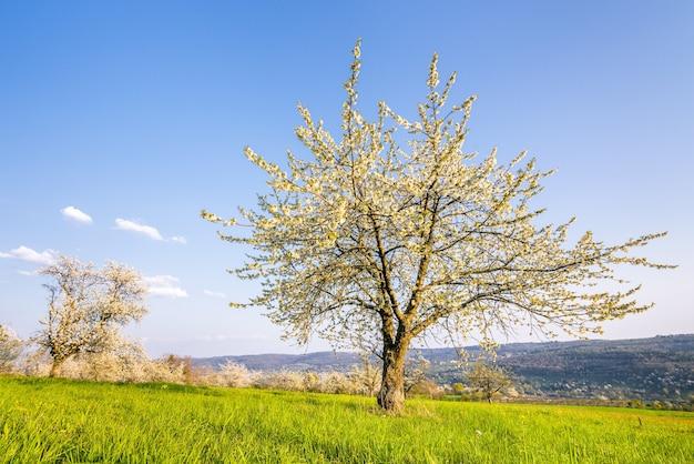 녹지로 둘러싸인 피 흰색 나무의 아름다운 샷