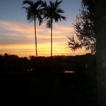 茂みや木々のあるシルエットのフィールドで曇った夕日の美しいショット