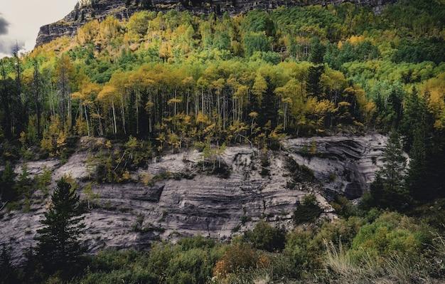 さまざまな種類の植物でいっぱいのカラフルな秋の森の美しいショット