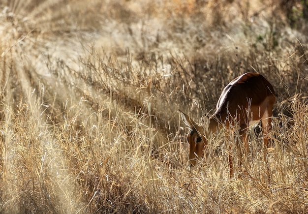 Красивый снимок милого оленя в полях