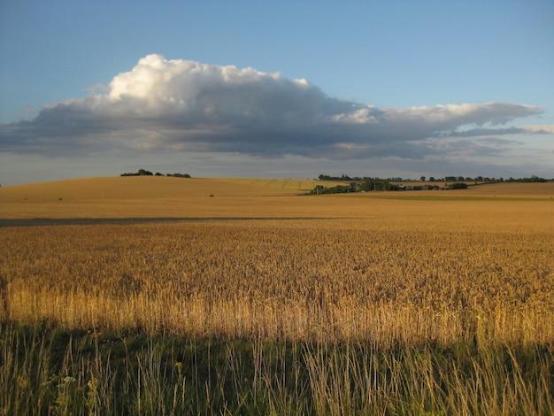 青い曇り空の下で遠くに木がある乾いた芝生のフィールドの美しいショット