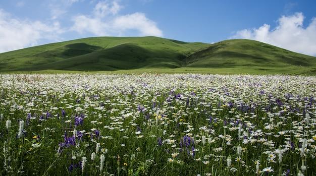 Красивый снимок поля, полного полевых цветов в окружении холмов