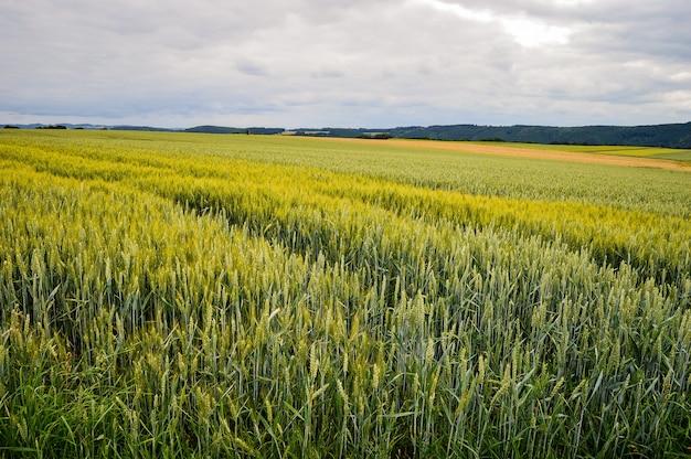 Красивый снимок поля у дороги в германии
