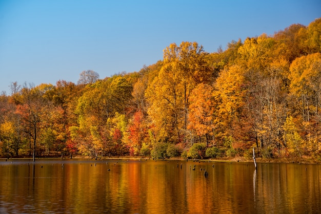 호수 옆에 숲의 아름다운 샷과 물에 화려한 가을 나무의 반사