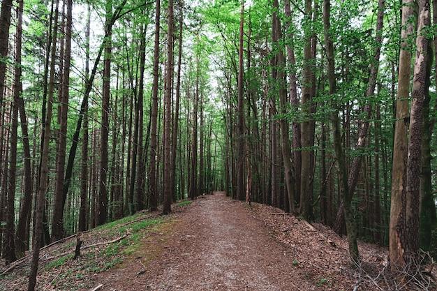 木々が生い茂る森とその真ん中にある小さな小道の美しいショット