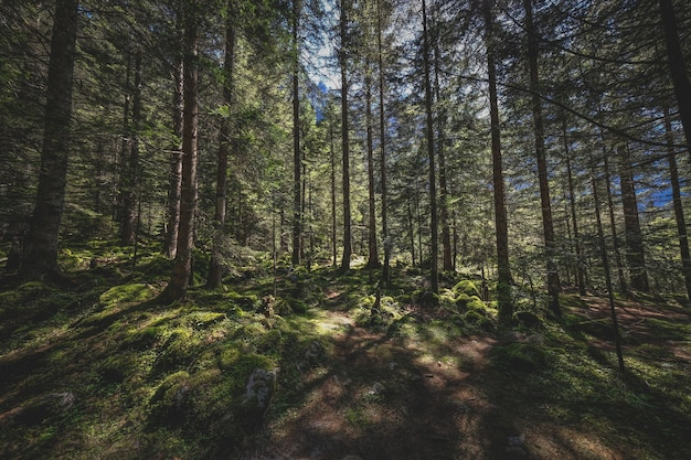 日光と森の美しいショット