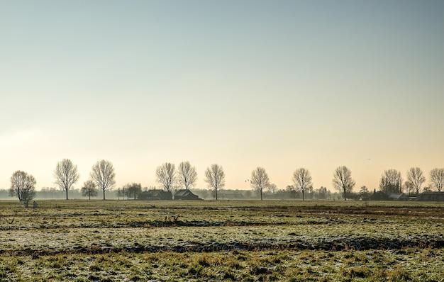 Красивый снимок травянистого поля со зданиями вдалеке возле голых деревьев