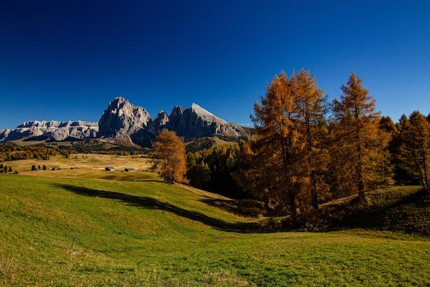ドロミテイタリアの遠くに木々と山のある芝生のフィールドの美しいショット