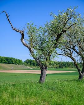그린 필드 한가운데 성장하는 나무의 아름다운 샷