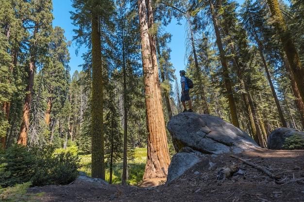 미국 캘리포니아 주 세쿼이아 국립공원의 바위 위에 서 있는 남성의 아름다운 사진
