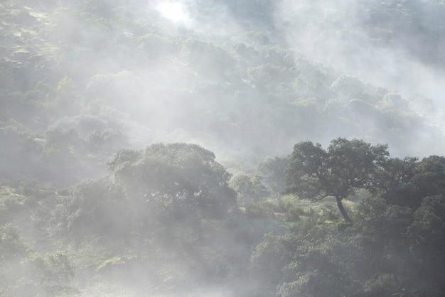 안개와 안개가 자욱한 신비한 숲의 아름다운 샷.