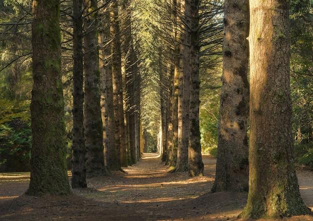 낮에 큰 키가 큰 나무가있는 숲 한가운데 통로의 아름다운 샷