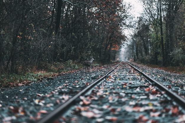 Красивый выстрел из железной дороги в лесу во время падения