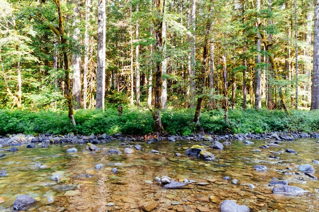 森の真ん中に岩だらけの川の美しいショット