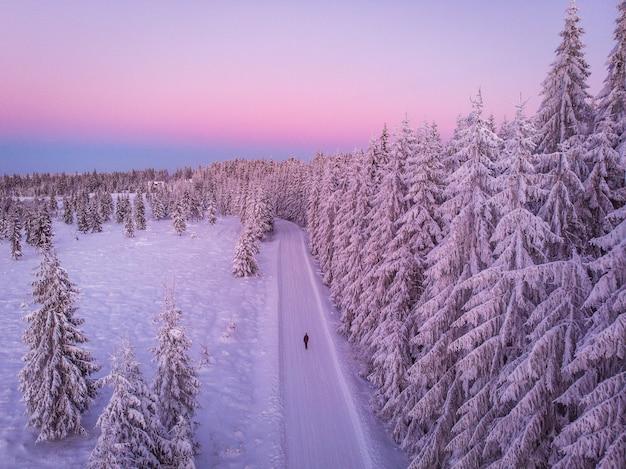 도로의 아름다운 샷과 일몰 동안 눈에 덮여 소나무로 가득한 숲