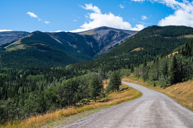 昼間のロッキー山脈と緑の森の道の美しいショット