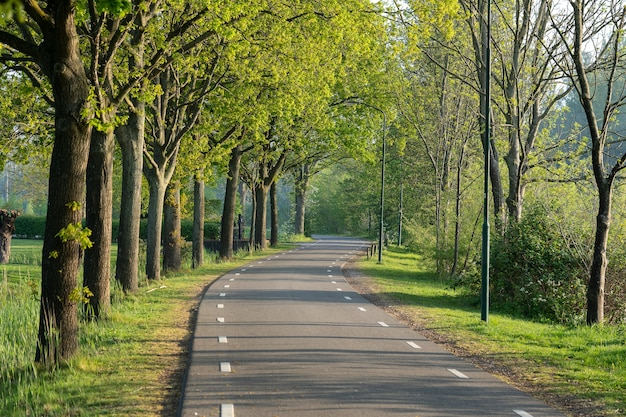 緑の木々に囲まれた道路の美しいショット