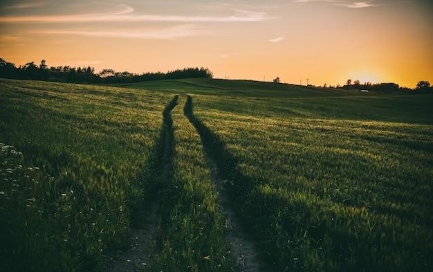 Красивый снимок дороги через траву во время оранжевого заката