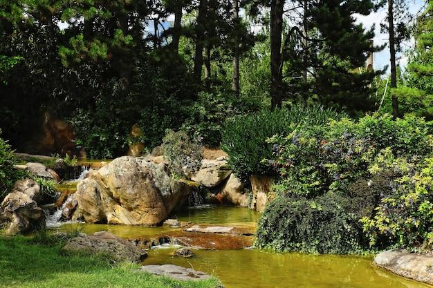 일광에 식물과 나무로 둘러싸인 바위 산 강의 아름다운 샷