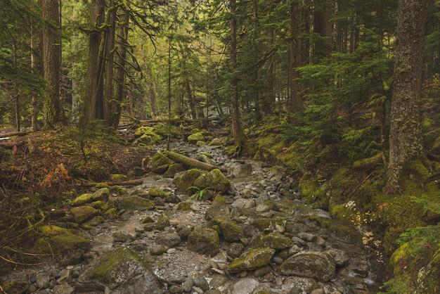 緑の葉のある木と森の真ん中に岩が多い経路の美しいショット