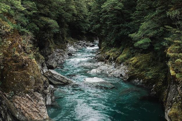 Красивый выстрел из скалистой реки с сильным течением в окружении деревьев в лесу
