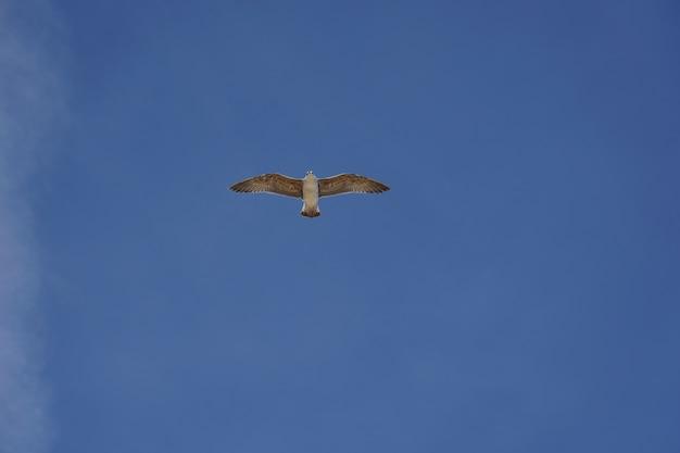 Красивый снимок чайки, летящей в ясном голубом небе в дневное время