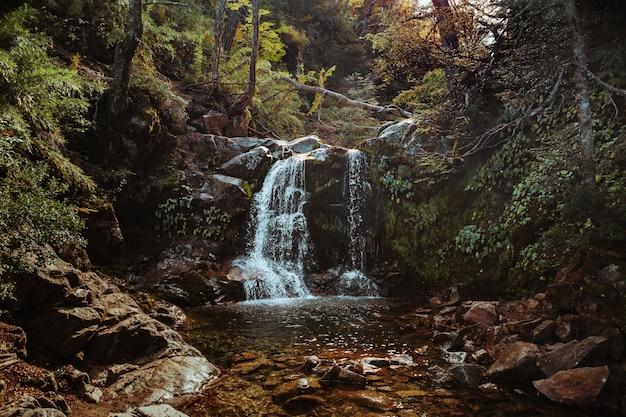 야생 숲에 흐르는 개울의 아름다운 샷