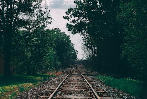 Красивая съемка железнодорожной колеи в окружении деревьев