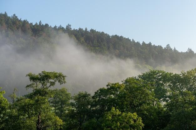 Красивый снимок древесного леса в окружении высоких гор, окутанных туманом