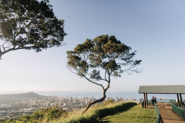 アメリカのハワイ、ホノルルの景色を見下ろす山の中の木の美しいショット