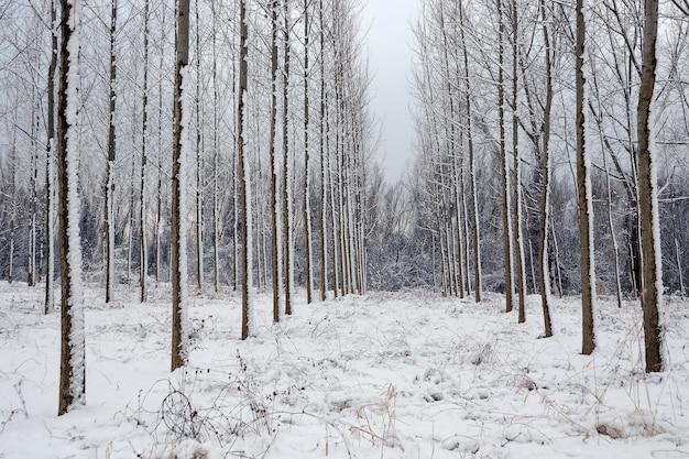 冬の雪に覆われた森の風景の美しいショット