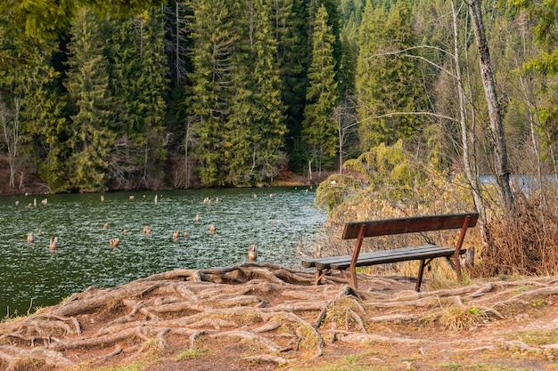 森の中の湖の近くの木製のベンチの美しいショット