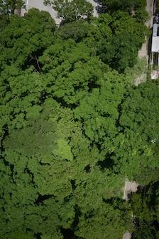 Красивый выстрел изумительной зелени в сельской местности